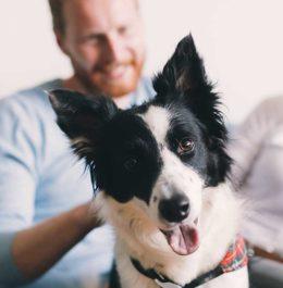 daň za psa