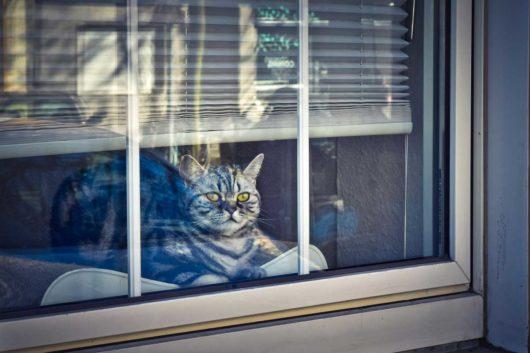 mačka v byte