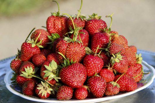zavárané jahody